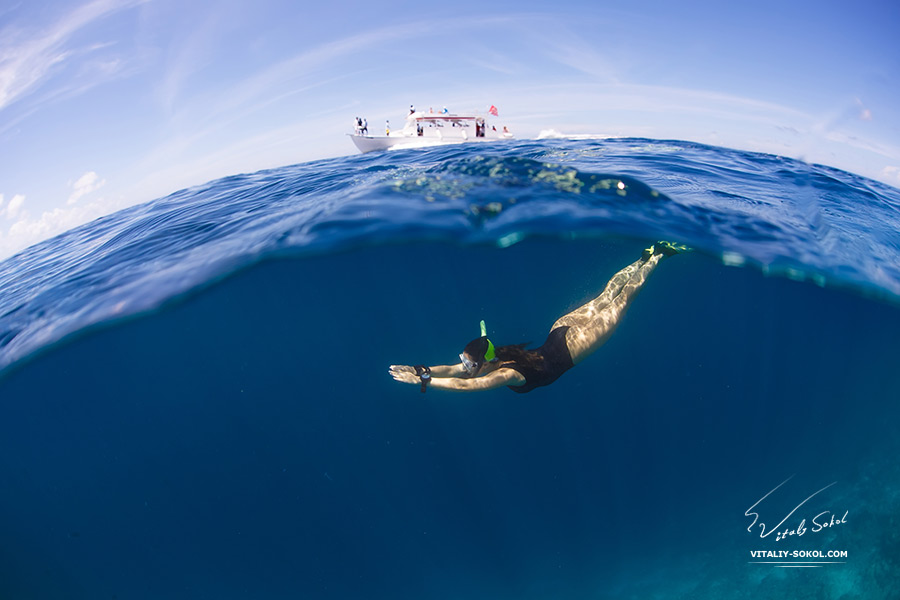 Ocean Life Water Sports Postcard. Underwater world with freediver discovered