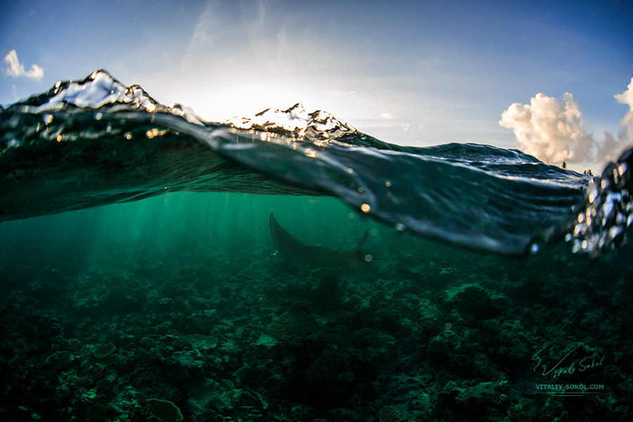 Mantaray underwater with sun and water surface