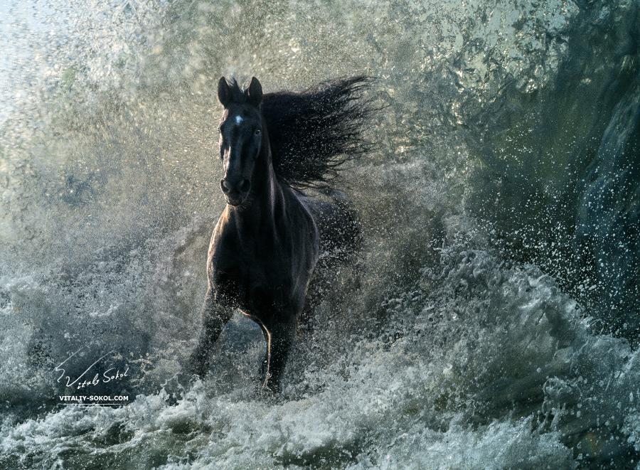 A horse running through storm water