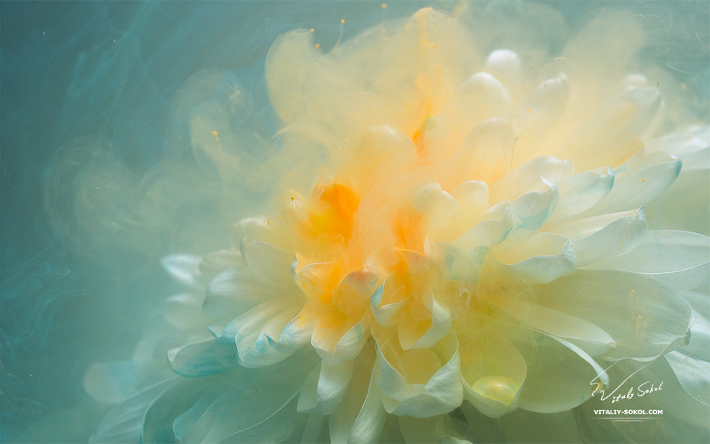 Flower in water with flowing paint on petails
