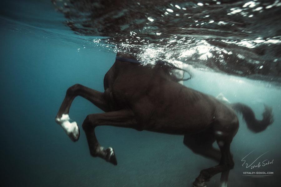 Swimming Horse Underwater photo by Vitaliy Sokol