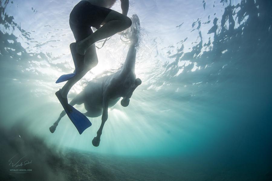 Horse underwater