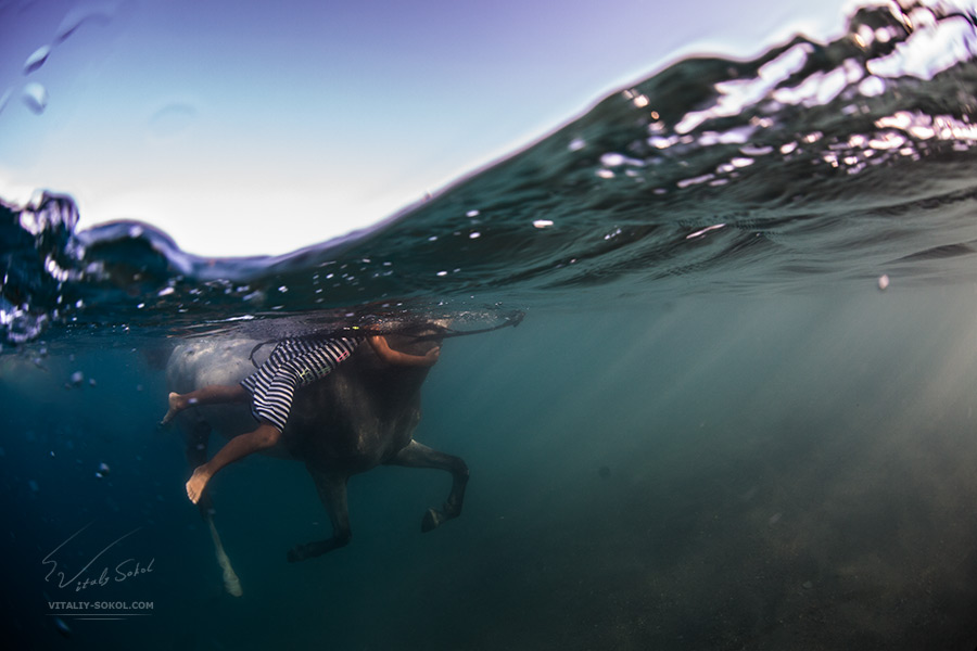 A little girl swimming with horse. View from underwater part. Half water split image.