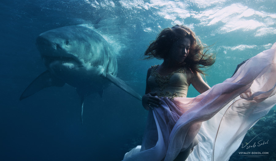 Great White Shark and fashion model underwater