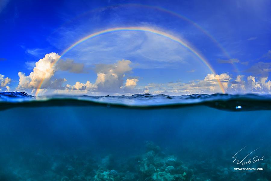 Ocean Sceneries and Underwater wildlife by Vitaly Sokol