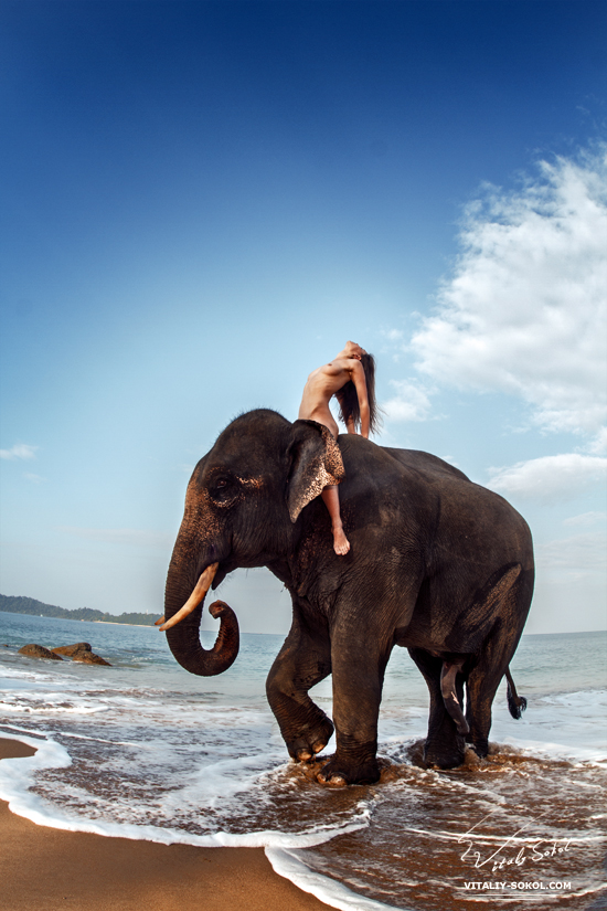 Naked girl riding elephant. Beauty nude wild. Elephant and model