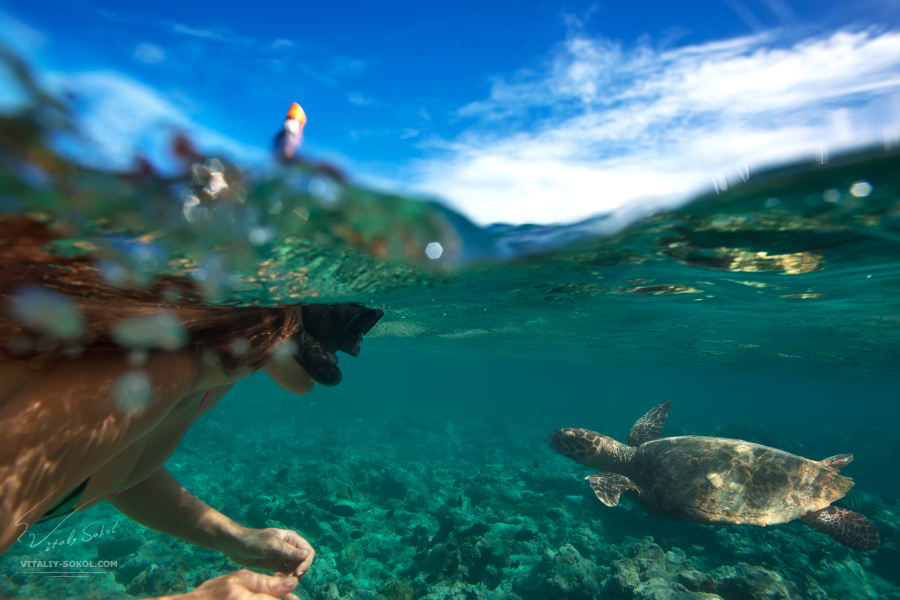 A woman diving with turtle in sea. Half water split