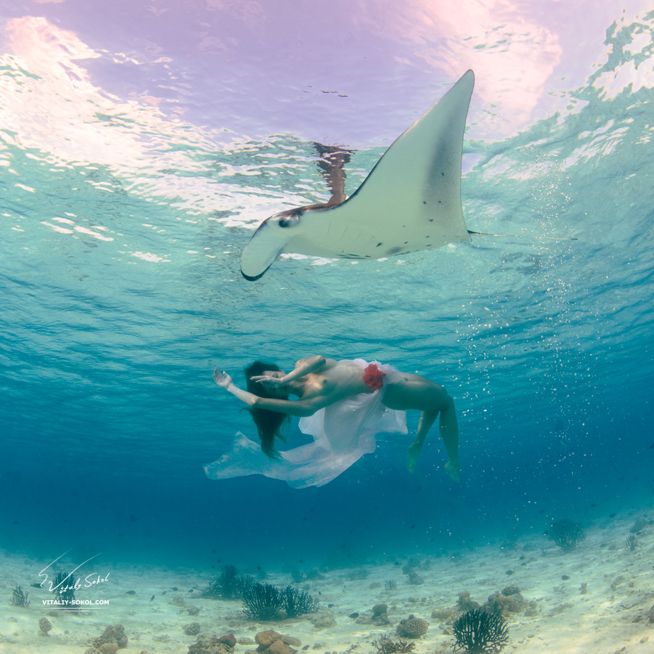 An ocean wildlife. Mantaray floating with beautiful naked model underwater in Indian ocean. Open water freediving at Maldives. Sealife and relationship with wild animals. Underwater Nude