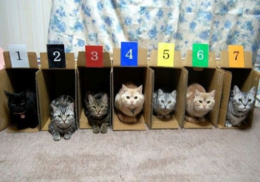 organize_your_cats_09_530