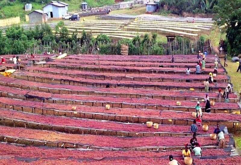 Сушка кофе в Эфиопии