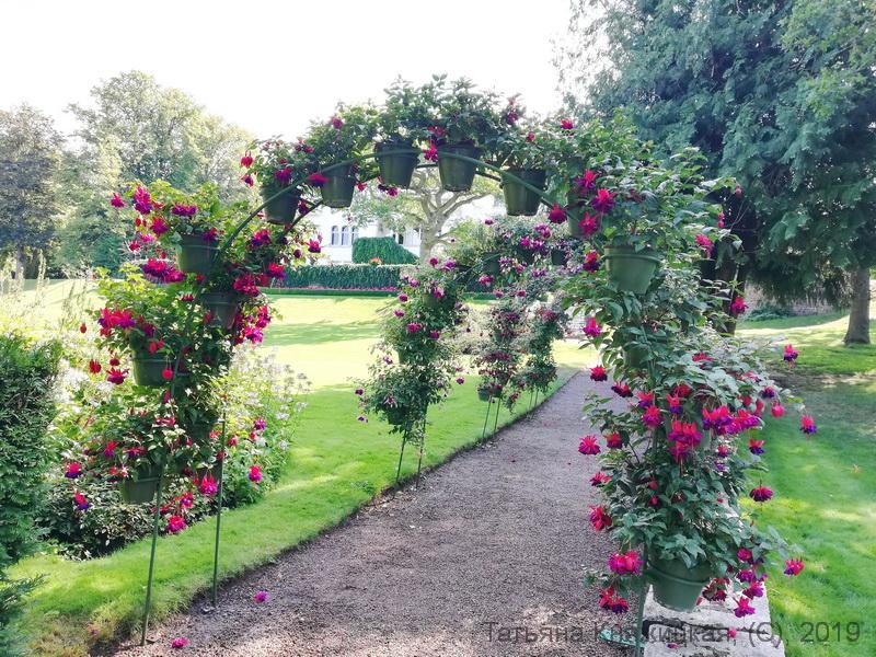 Цветы в парке Sollidens slott. Остров Эланд, Швеция. Фото 2019