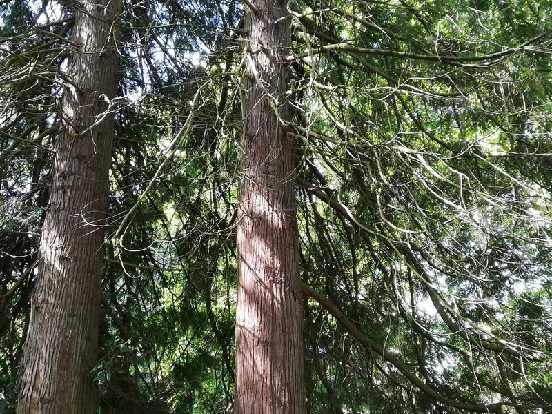 Деревья английского парка на территории резиденции Соллиденс. Остров Эланд, Швеция. Фото 2019
