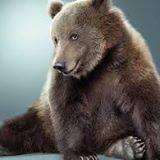 Игорь Александрович Медведь