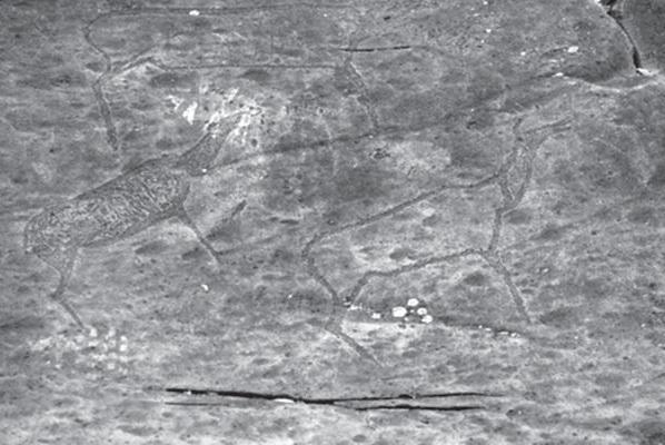 Рис. 1 — Маралихи с детёнышем