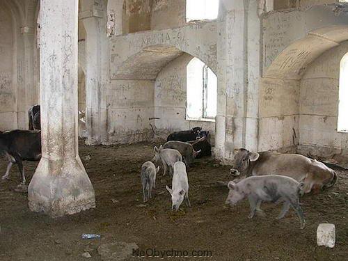 agdam12-cowspigs
