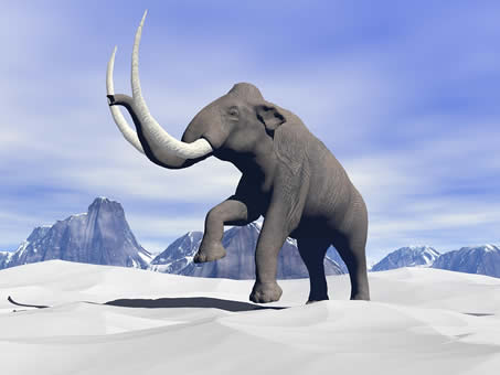 Mammoth-In-The-Snow