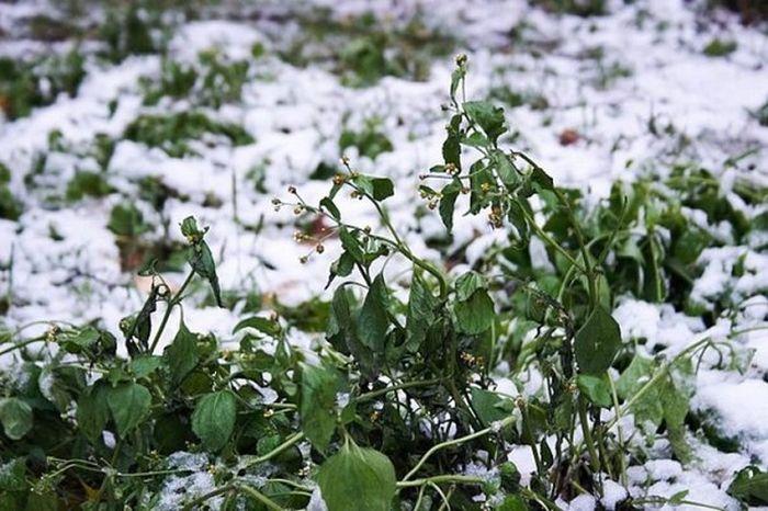 snow_090