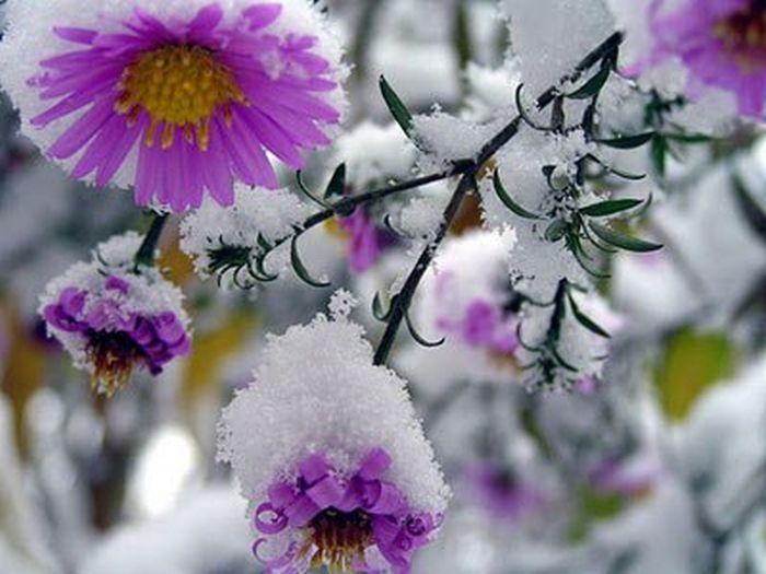 snow_120