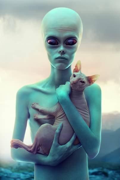 кошка-сфинкс-4