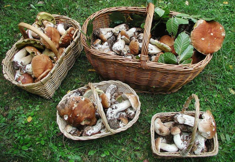 mushrooms_boletus_baskets