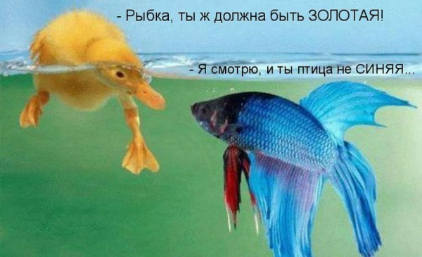 птичка и рыбка