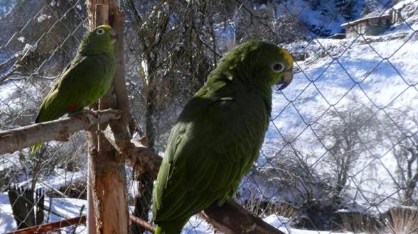 Профилактика проблем с оперением попугаев зимой
