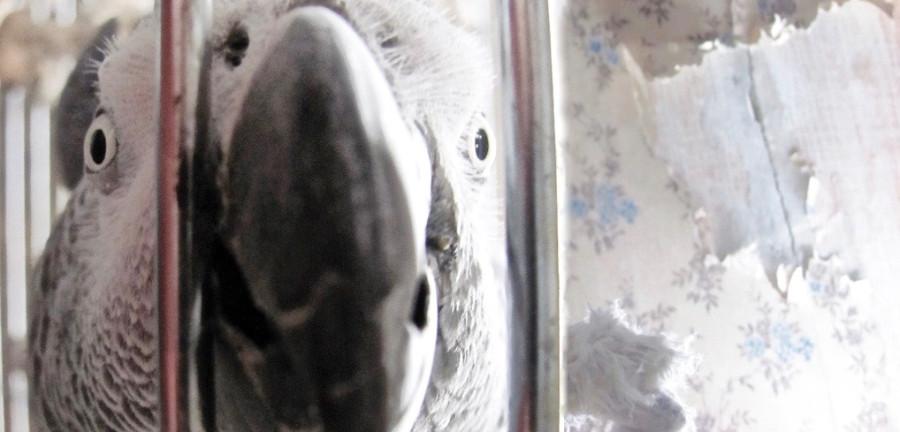 попугаи не домашние животные