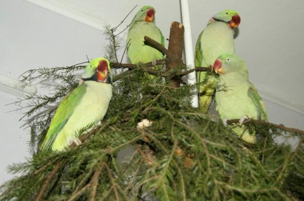 использование елки как фуражилки