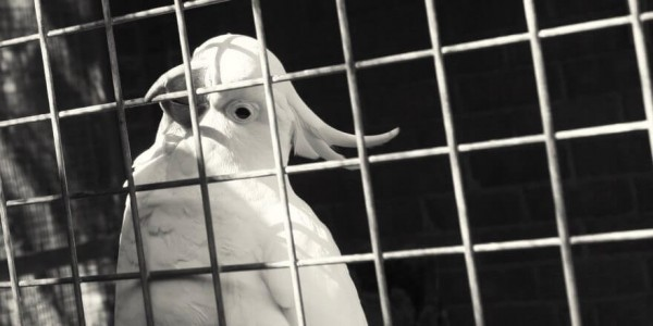 С.freundii птиц
