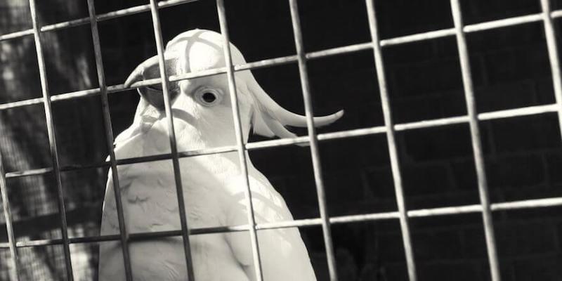болезни и лечение попугаев