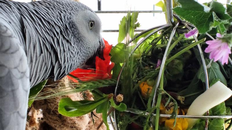безопасные игрушки для попугаев