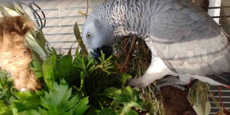 пряности и специи попугаям