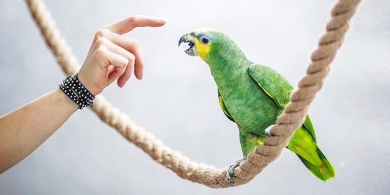 как вылечить попугая от аспергиллеза