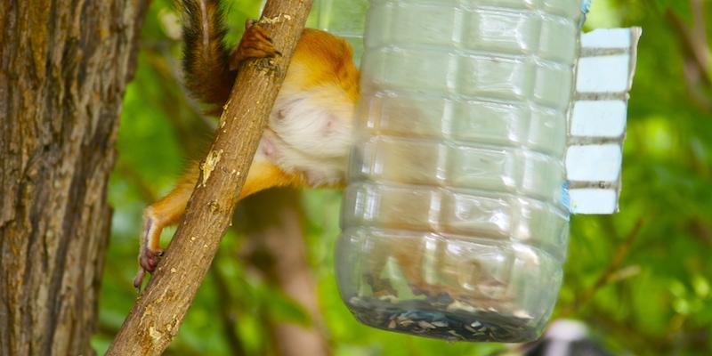 кормушки для птиц, вред и опасность