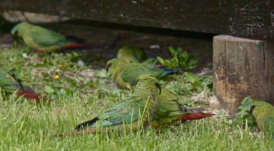 пищевое поведение попугаев
