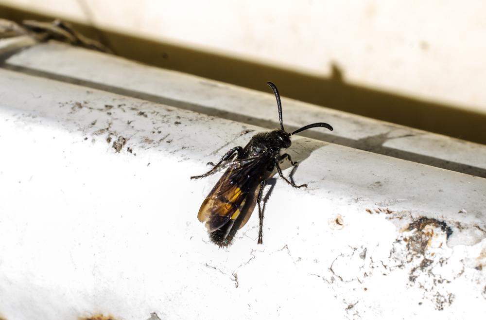 донецке, черные осы в квартире фото надо