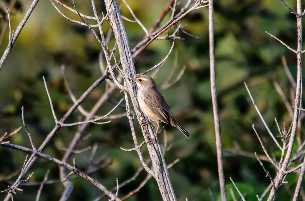 лесные птицы чувашии фото с названиями рисунке