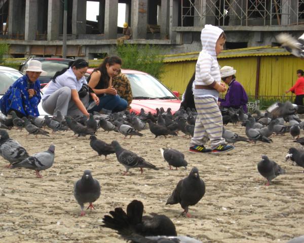 Люди кормят голубей