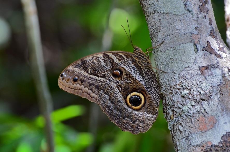 бабочка у реки кукенан