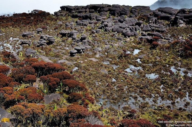 Северный пейзаж - скалы и кусты bonnetia roraimae