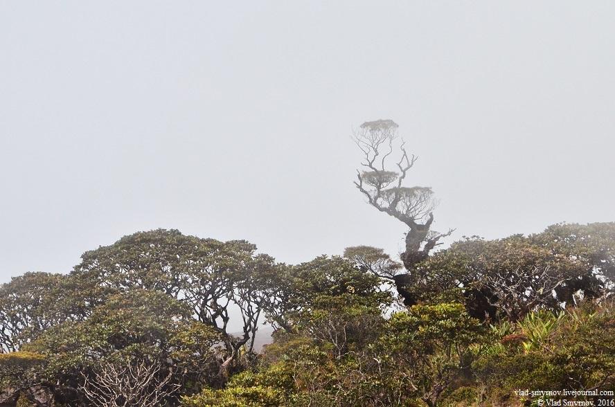 самое необычное дерево на плато
