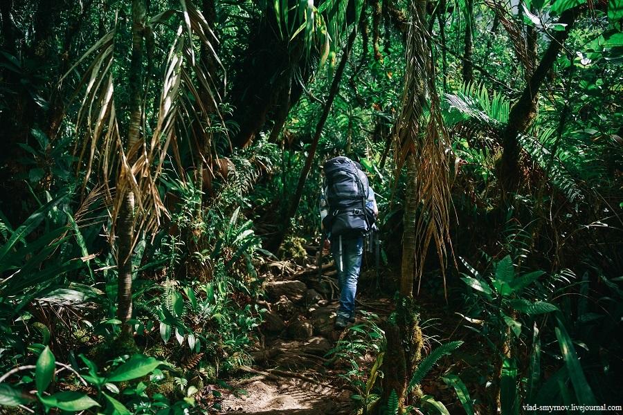 по тропе через джунгли