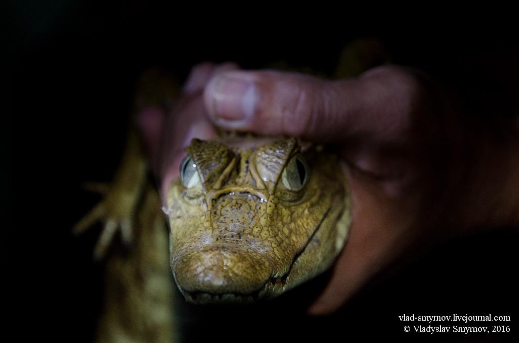 холодный взгляд рептилии