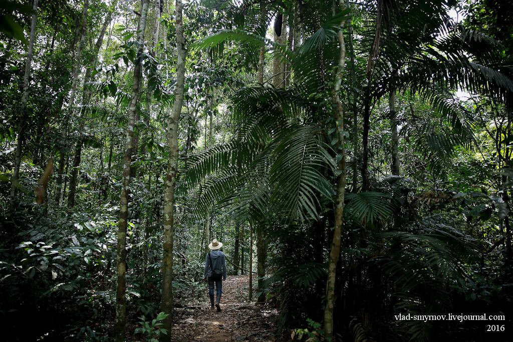 через джунгли Перу