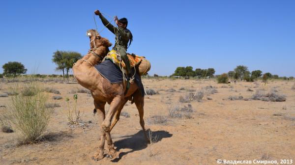 Погонщик верблюдов. Пустыня Тар