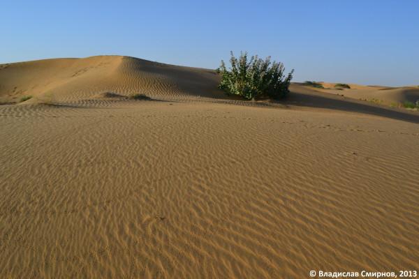 Песчяный дюн. Пустыня Тар