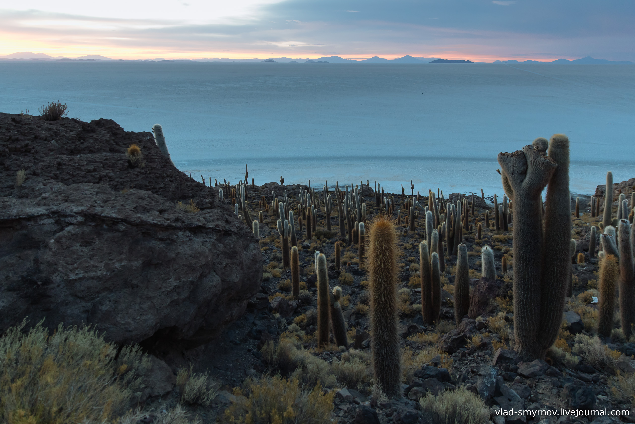 Остров кактусов