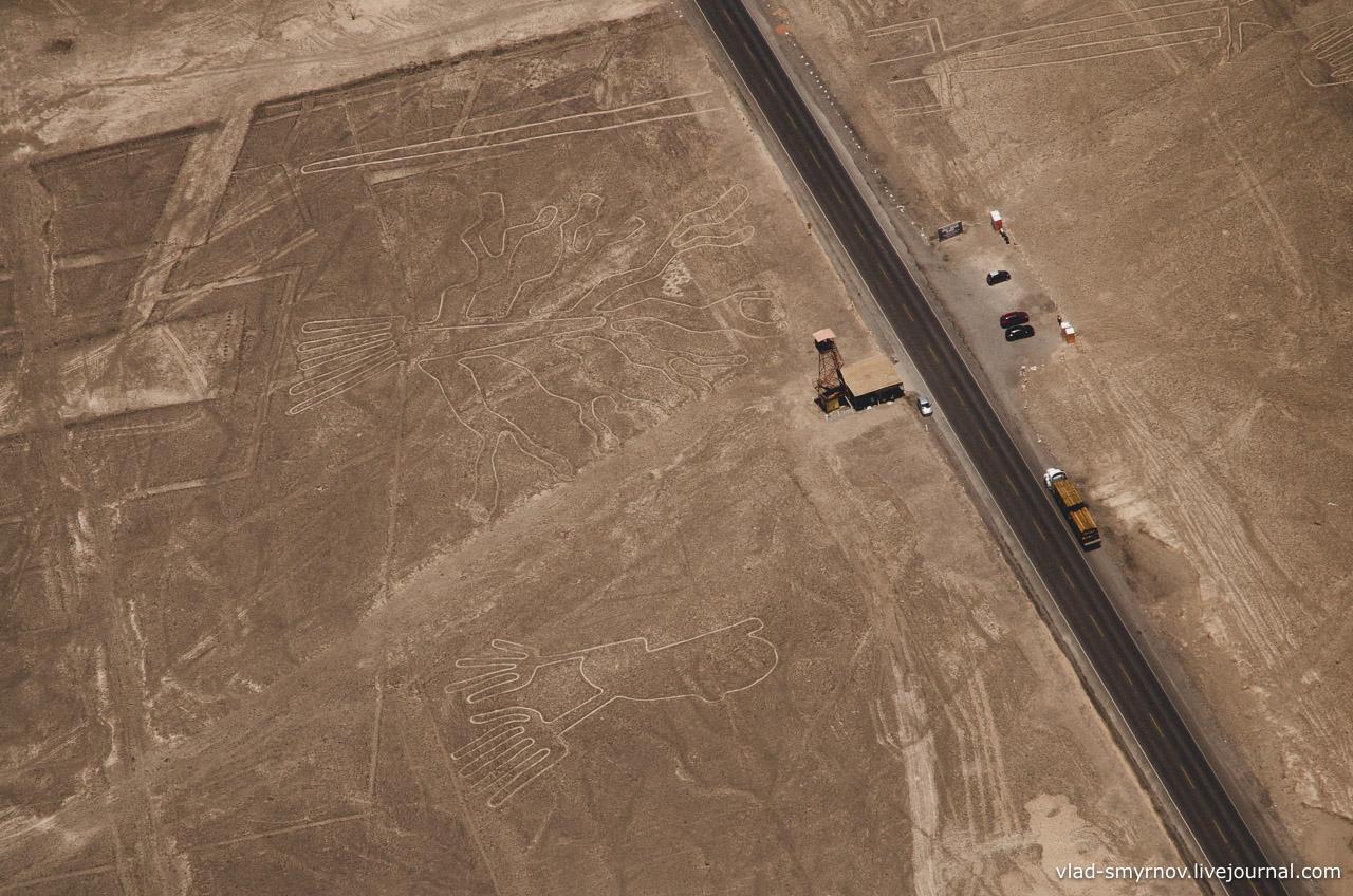 Геоглифы Дерево и Руки (Цыплёнок). Также наверху виден хвост перерезанной шоссе ящерицы.