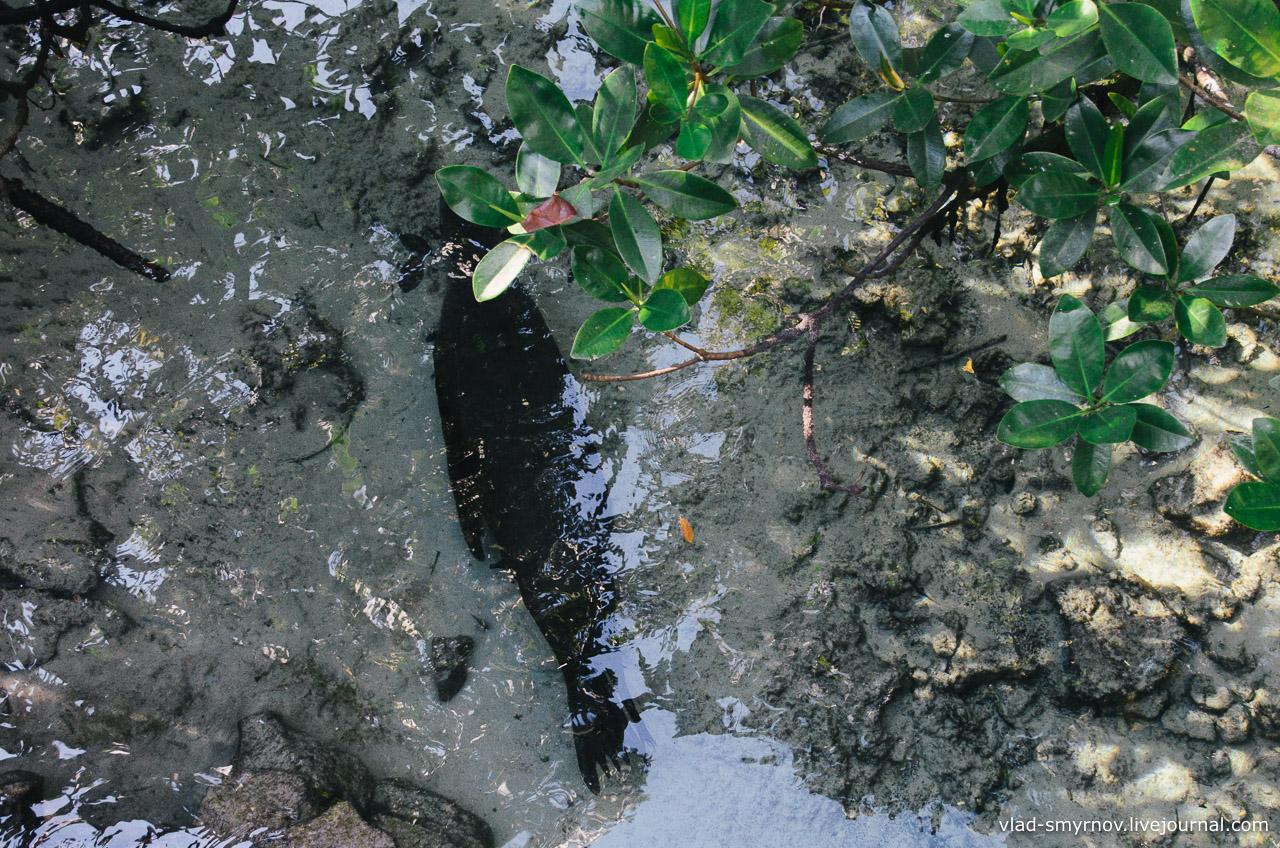 Под мостиком проплывает морской котик