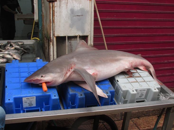 12 акула